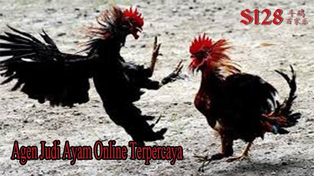 Daftar Judi Ayam Online